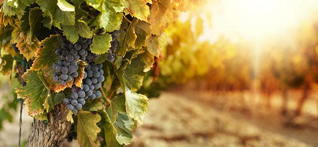 Local Wineries at Pennsylvania