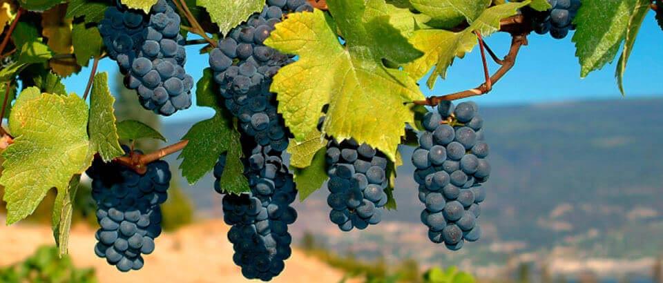 Local Wineries Pennsylvania